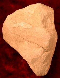 sandstone   quartz  areniteQuartz Arenite Rock