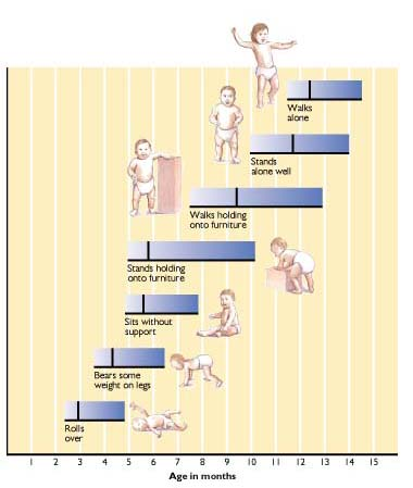 Gross Motor Skills Development Chart